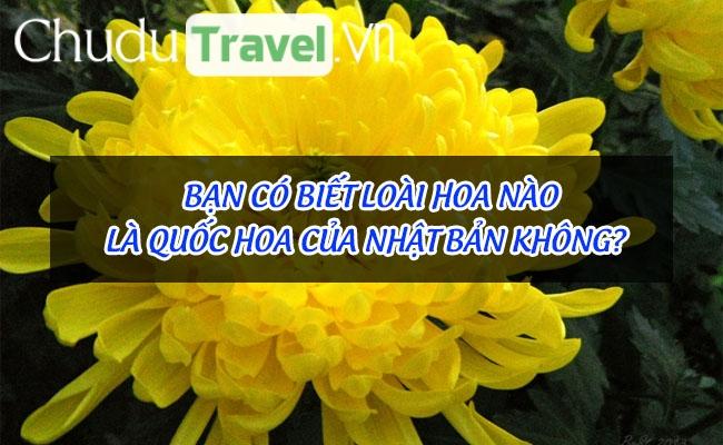 Bạn có biết loài hoa nào là quốc hoa của Nhật Bản không?